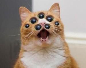 Foto einer roten Katze mit offenem Mäulchen, der durch Bildmanipulation fünf zusätzliche Augen auf das Gesicht gesetzt wurden.