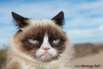 Grumpy cat, who isn't acutally grumpy but looks a lot like she is.